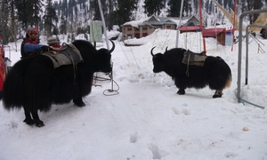 A land for all seasons - Himachal Pradesh