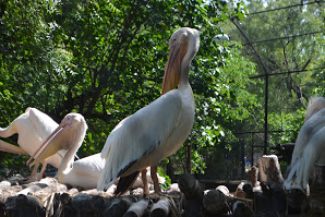 A day in Nehru Zoological Park