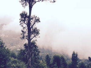 Kodaikanal: Princess of hill stations!