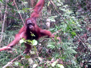 On The Wild Side: Borneo's Rainforests