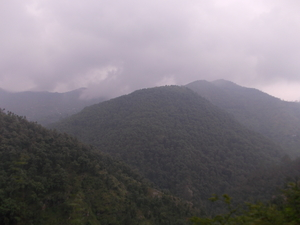 The pine forest at Dhanachuli