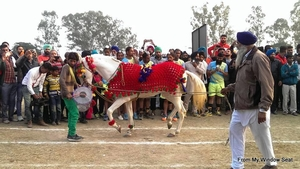 The Many Hues of Kila Raipur Rural Olympics