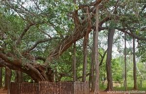 Pondi diaries: Auroville Edition [part II]