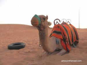 Amateur's Guide to Dubai