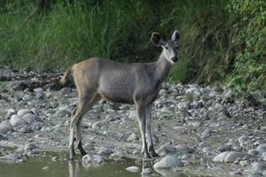 Trip to Corbett National Park
