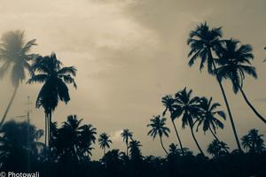 Backwaters - God's own country - Kerala Take 1!