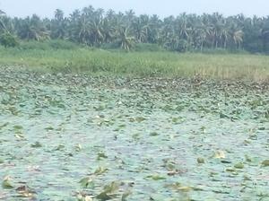 Back at the waters - Ashtamudi, Kerala