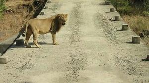 Safari Ride in Gir