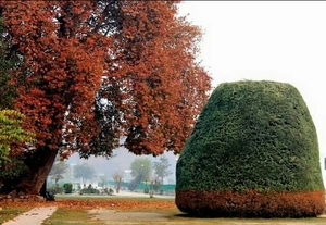 Fall in love with Kashmir