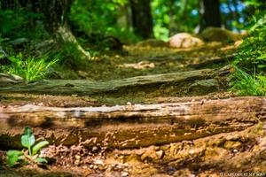 Nature's Calling! Visit Shenandoah National Park
