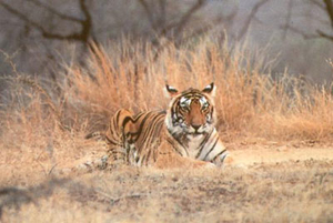 Best Time To Visit Kanha National Park
