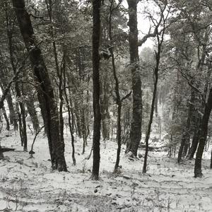 Serene Snow-clad Serolsar