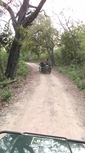 Lost in jim corbett with tigers