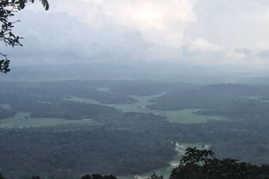 A monsoon expedition at Agumbe and Sringeri