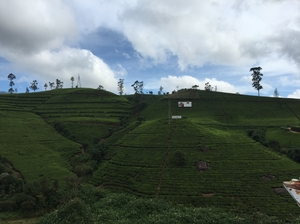 The Hill Country - Nuwara Eliya, Sri Lanka
