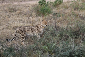 An animal lover's paradise – South Africa