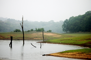 Pristine Kerala- Thekkady