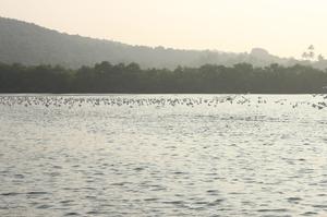 Ditch Goa - Go Tarkali!