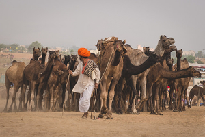 12 Reasons Why You Can't Miss The Pushkar Mela This Year!