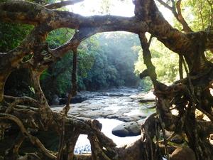 First Spontaneous Solo Trip to Meghalaya