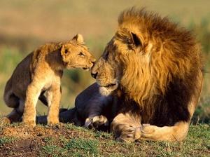 A Safari Across South Africa, Kenya & Tanzania