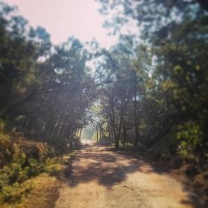 Roadtrip to Ooty