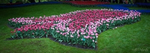 Keukenhof : Where The Grass Is Green On All Sides