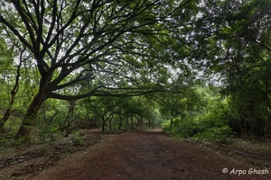 Soaked in fun at Vikarabad- Ananthagiri Hills
