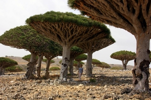 The lost planet of Socotra