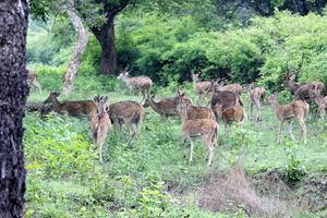 Weekend trip to Bandipur Tiger Reserve