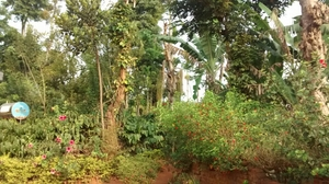 Ride to Coorg