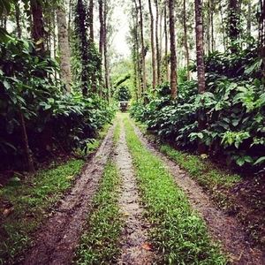 Calm, Serene and Divine: Coorg Calling !
