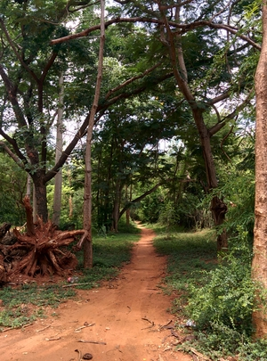 Discover Yourself in Auroville