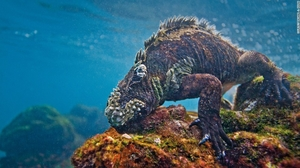Galapagos Islands: Wildlife and more!
