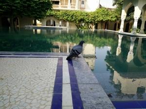 Naila Bagh Palace: Royal Jaipur Stay