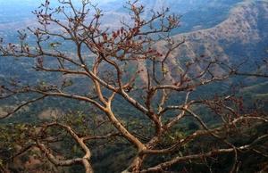 Mahabaleshwar: A gem of Western Ghats