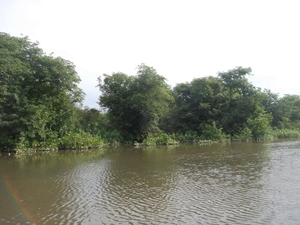 Ratargul Swap Forest: The Desi Amazon