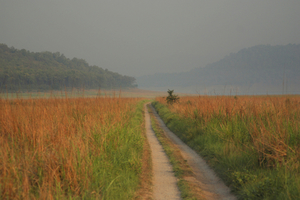 Best Jungle Camping sites in India