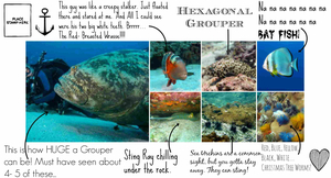 50 shades of blue – Scuba diving in Koh Tao, Thailand