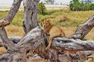 5 Best Destinations For Safari Vacations