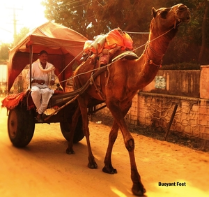 4 Places You Can't Miss On A Jodhpur To Jaisalmer Road Trip