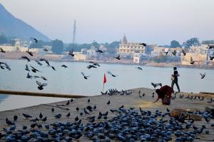 A Parikrama at the Pushkar Ghat
