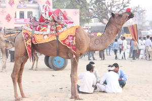 Pushkar Fair – A Story Untold