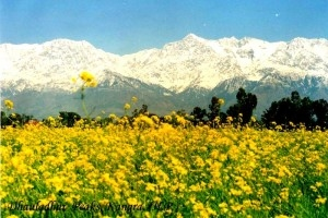 Why You Should Choose Himachal Pradesh for Your 1st Solo Journey!