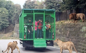 Humans Are Caged At This Unique Zoo in China, While Animals Roam Free