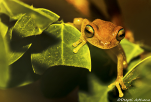 Time to kiss the frog? Visit Agumbe