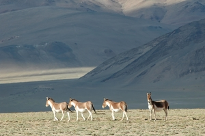 Secrets of Ladakh That Locals Keep To Themselves