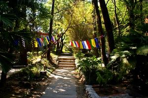 Tranquility at Dharamsala