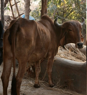Hide Out, Jhadpoli, Maharastra : Your Home In A Farmstay