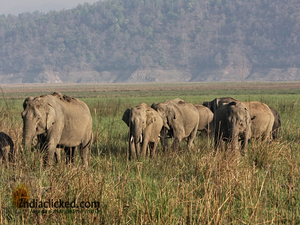 A Photographer's Travel Tales at Corbett National Park, India